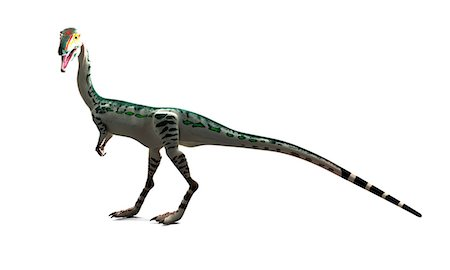 prehistoric - Coelophysis dinosaur, computer artwork. Stock Photo - Premium Royalty-Free, Code: 679-07603739