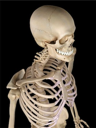 rib - Human thorax anatomy, computer artwork. Stock Photo - Premium Royalty-Free, Code: 679-07650519