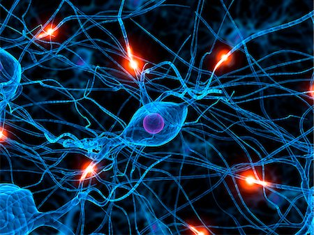 Nerve cell network, computer artwork. Stock Photo - Premium Royalty-Free, Code: 679-07732495