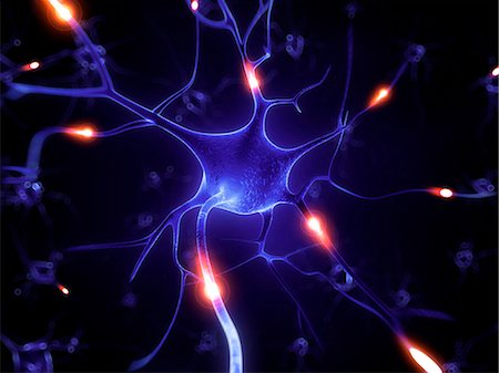 Nerve cell, computer artwork. Stock Photo - Premium Royalty-Free, Code: 679-07732497