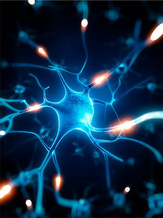 Nerve cell, computer artwork. Stock Photo - Premium Royalty-Free, Code: 679-07732508