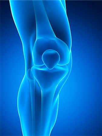Human knee joint, computer artwork. Stock Photo - Premium Royalty-Free, Code: 679-07764366