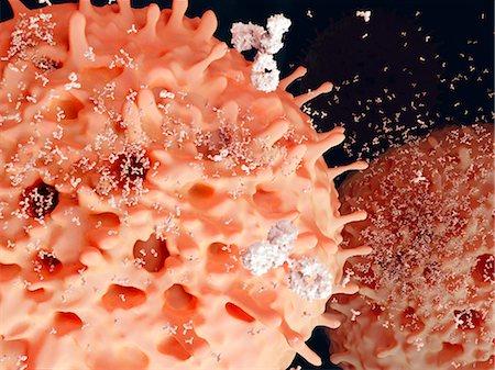 plasma - Plasma cells. Computer artwork of plasma cells, a type of white blood cell, secreting antibodies (white). Stock Photo - Premium Royalty-Free, Code: 679-07764676