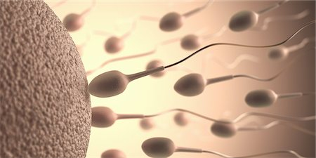 sperme - Human sperm and egg, conceptual artwork. Stock Photo - Premium Royalty-Free, Code: 679-07764746