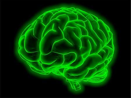 Human brain, computer artwork. Stock Photo - Premium Royalty-Free, Code: 679-07764836