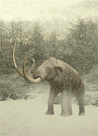 prehistoric - Woolly mammoth in snow Stock Photo - Premium Royalty-Free, Code: 679-07814058