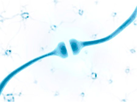 synapse - Human synapse, artwork Stock Photo - Premium Royalty-Free, Code: 679-07815045