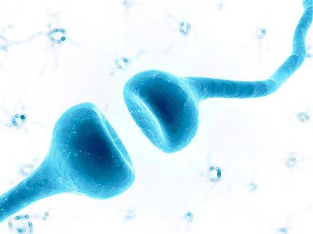 synapse - Human synapse, artwork Stock Photo - Premium Royalty-Free, Code: 679-07815046