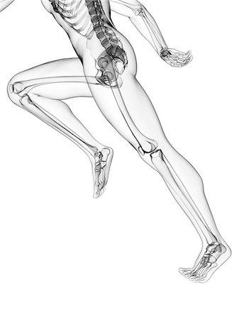 Skeletal system of runner, artwork Stock Photo - Premium Royalty-Free, Code: 679-07815088