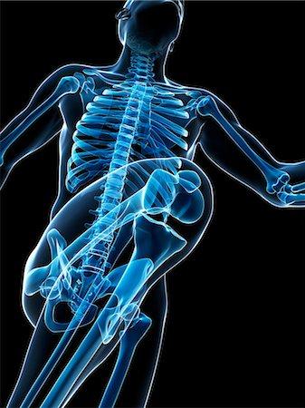 Skeletal system of runner, artwork Stock Photo - Premium Royalty-Free, Code: 679-07815080