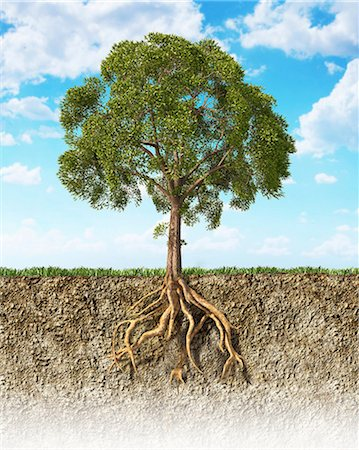 Tree roots in the soil, computer artwork. Stock Photo - Premium Royalty-Free, Code: 679-07846234