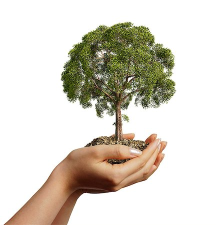 Person holding a tree, computer artwork. Stock Photo - Premium Royalty-Free, Code: 679-07846235