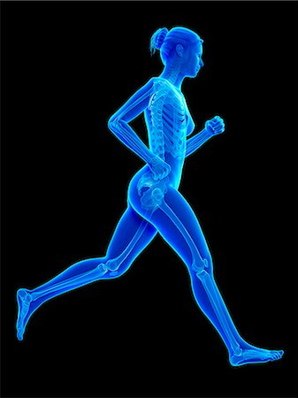 Skeletal system of a runner, computer illustration. Stock Photo - Premium Royalty-Free, Code: 679-07962579