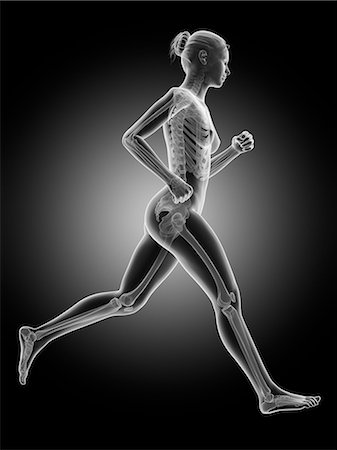 Skeletal system of a runner, computer illustration. Stock Photo - Premium Royalty-Free, Code: 679-07962585