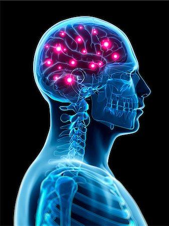 Human brain activity, computer illustration. Stock Photo - Premium Royalty-Free, Code: 679-07963142