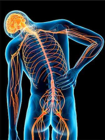 spinal column - Human back pain, computer illustration. Stock Photo - Premium Royalty-Free, Code: 679-08008984