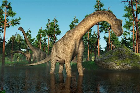 prehistoric - Brachiosaurus, computer illustration. Stock Photo - Premium Royalty-Free, Code: 679-08106492
