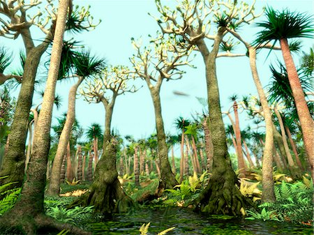 prehistoric - Carboniferous forest, computer illustration. The Carboniferous is a geologic period extending from about 350 to 300 million years ago. Stock Photo - Premium Royalty-Free, Code: 679-08121033