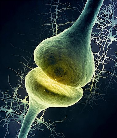 synapse - Synapse in the nervous system, computer illustration. Stock Photo - Premium Royalty-Free, Code: 679-08121848