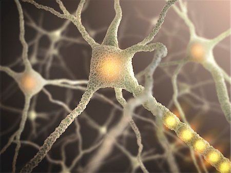 synapse - Nerve cell, computer illustration. Stock Photo - Premium Royalty-Free, Code: 679-08221204