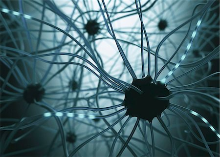 synapse - Human nerve cells, illustration. Stock Photo - Premium Royalty-Free, Code: 679-08426497