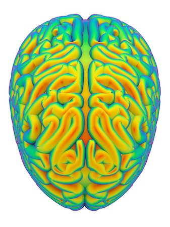 Human brain, computer artwork. Stock Photo - Premium Royalty-Free, Code: 679-08426501