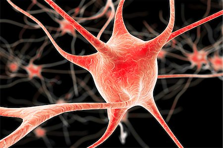 Nerve cells. Computer artwork of nerve cells, or neurons. Stock Photo - Premium Royalty-Free, Code: 679-08536337