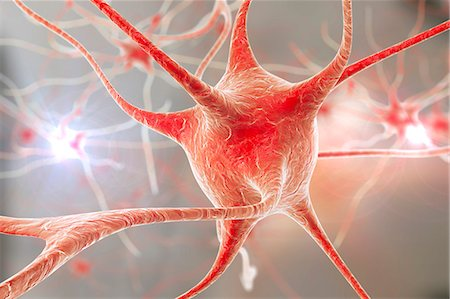Nerve cells. Computer artwork of nerve cells, or neurons. Stock Photo - Premium Royalty-Free, Code: 679-08536339