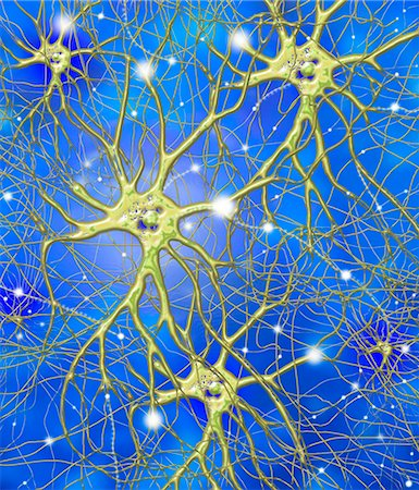 Nerve cells. Computer artwork of nerve cells, or neurons. Stock Photo - Premium Royalty-Free, Code: 679-02684641