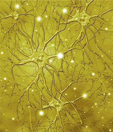 Nerve cells. Computer artwork of nerve cells, or neurons. Stock Photo - Premium Royalty-Free, Code: 679-02684642