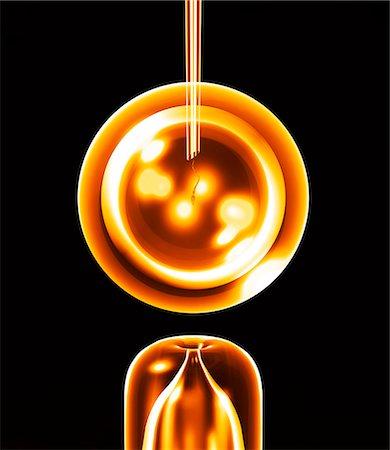 sperme - In vitro fertilisation (IVF), conceptual computer artwork. Stock Photo - Premium Royalty-Free, Code: 679-02684650