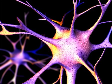 synapse - Nerve cells. Computer artwork of nerve cells, or neurons. Stock Photo - Premium Royalty-Free, Code: 679-02681888