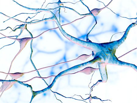 synapse - Nerve cells. Computer artwork of nerve cells, or neurons (blue), and glial (support) cells (pink). Stock Photo - Premium Royalty-Free, Code: 679-02681889