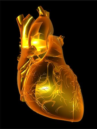 Computer artwork of the heart with coronary vessels. Stock Photo - Premium Royalty-Free, Code: 679-03678320