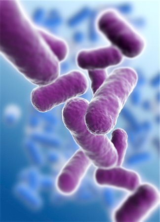 3D-computer artwork of bacillus bacteria. These rod-shaped bacteria (bacilli) are widespread in soil and in the air. Many bacillus bacteria are responsible for food spoilage. Also tetanus, anthrax, botulism and tuberculosis are caused by such bacteria. Stock Photo - Premium Royalty-Free, Code: 679-03680730