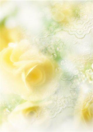 flower graphic - Flowers Stock Photo - Premium Royalty-Free, Code: 670-05652449