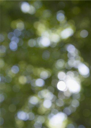 Image of sunshine filtering through foliage Stock Photo - Premium Royalty-Free, Code: 670-06450003