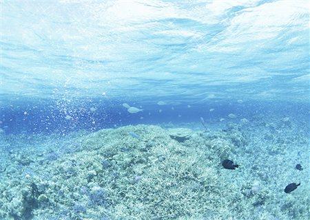 refraction - Underwater Stock Photo - Premium Royalty-Free, Code: 670-02116988