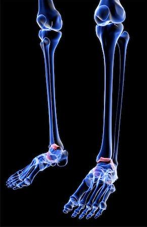 The bones of the leg Stock Photo - Premium Royalty-Free, Code: 671-02094880