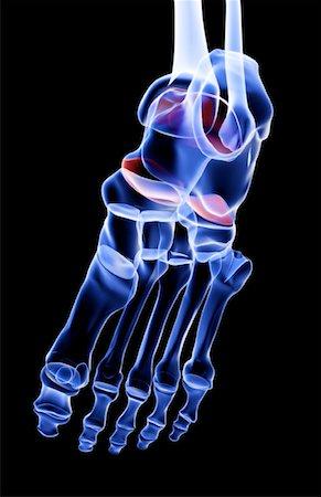 The bones of the foot Stock Photo - Premium Royalty-Free, Code: 671-02094902