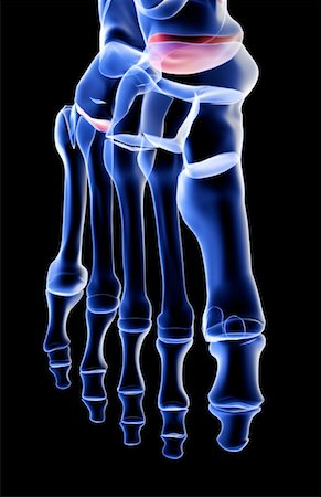 The bones of the foot Stock Photo - Premium Royalty-Free, Code: 671-02092634