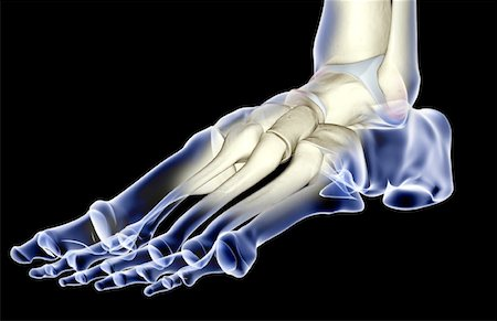 The bones of the foot Stock Photo - Premium Royalty-Free, Code: 671-02093542