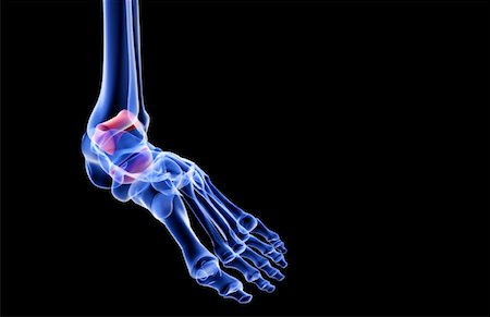 The bones of the foot Stock Photo - Premium Royalty-Free, Code: 671-02093847