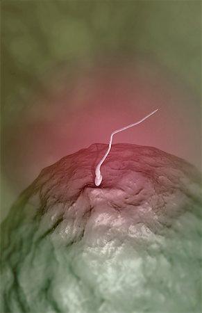 sperme - Fertilization Stock Photo - Premium Royalty-Free, Code: 671-02101047