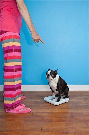 Woman looking at dog sitting on scales Stock Photo - Premium Royalty-Free, Code: 673-06025325