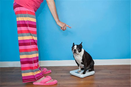 Woman looking at dog sitting on scales Stock Photo - Premium Royalty-Free, Code: 673-06025326