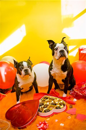Dogs with valentines and candy Stock Photo - Premium Royalty-Free, Code: 673-06025328