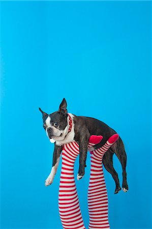 Legs in striped socks with colorful shoes holding dog Stock Photo - Premium Royalty-Free, Code: 673-06025432