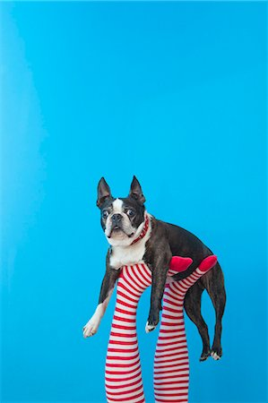 Legs in striped socks with colorful shoes holding dog Stock Photo - Premium Royalty-Free, Code: 673-06025433