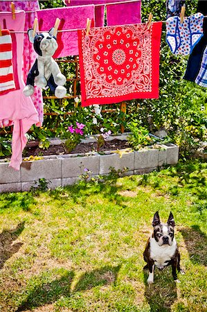 Laundry and stuffed dog hanging on outdoor lines over live dog Stock Photo - Premium Royalty-Free, Code: 673-06025441